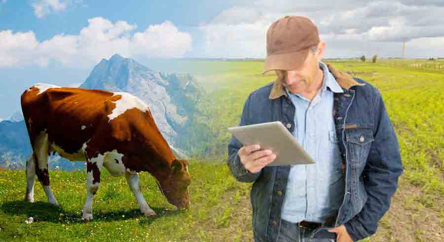 Why do Breeding Operations need Herd Management Systems?
