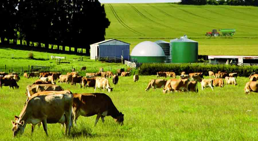 Greenhouse Gas At Cattle Farming Operations | MilkingCloud