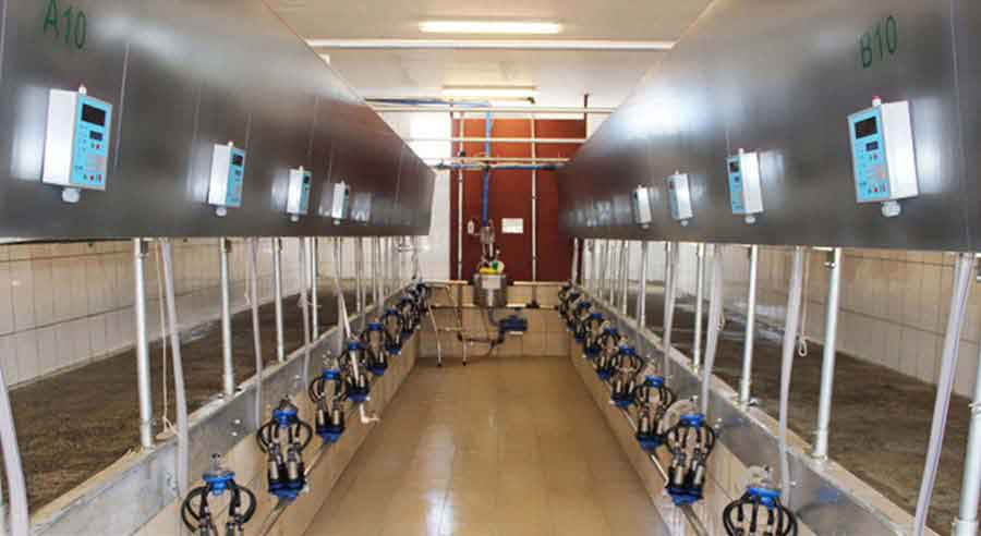 Importance of Using Technology at Dairy Farms